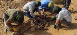 Exhumación HEGOA